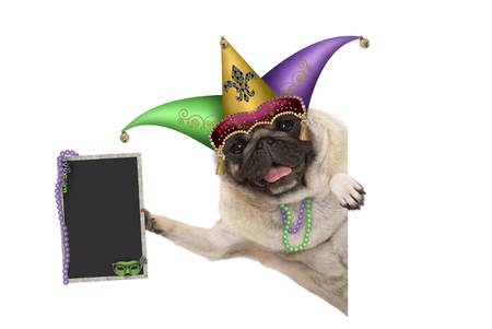 Mardi gras carnival pug dog with harlequin jester hat, venetian mask and decorated blackboard sign, isolated on white background