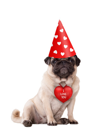 lovely cute Valentines day puppy pug dog sitting down with red I love you heart and party hat with hearts, isolated on white Stockfoto