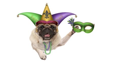 Pug van Mardi puppyhond met Carnaval-harlekijnhoed en het Venetiaanse masker hangen op lege die banner, op witte achtergrond wordt geïsoleerd Stockfoto - 93641289