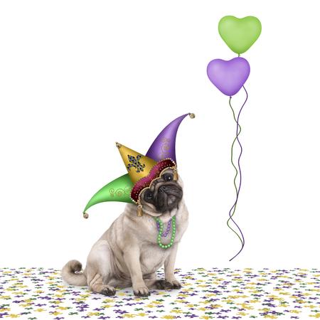 Schattig Mardi gras carnaval pug puppy hondje zitten op confetti met harlequin nar hoed en ballonnen, geïsoleerd op witte achtergrond Stockfoto - 93861761