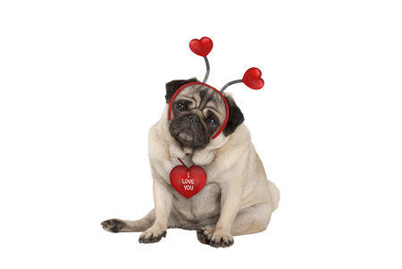 cute Valentines day pug puppy dog, sitting down, wearing hearts diadem, isolated on white background