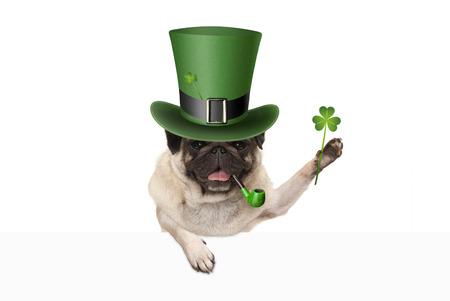 st patricks dag pug puppy hondje met groene kabouter hoed en pijp, klaver klaver te houden, geïsoleerd op witte achtergrond