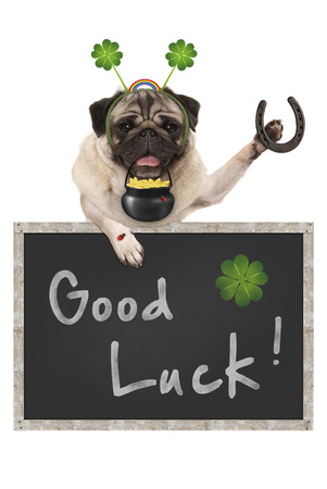 Talisman pug puppy dog, with blackboard sign, shamrock clover, golden coins, lady bug and horse shoe for good luck and success, isolated on white background