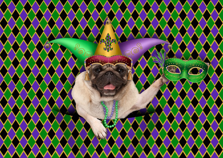 checkered mardi gras, fat tuesday, background, with harlequin pug dog holding venetian mask, wearing harlequin jester hat