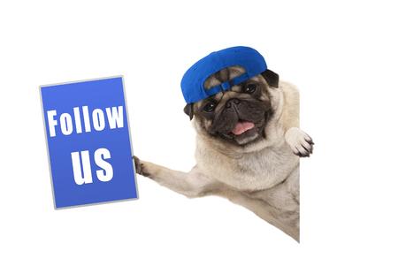 dartel pug puppy hondje met pet, blauw houden volg ons teken, zijwaarts hangend van witte banner, geïsoleerd Stockfoto