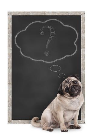 zoete slimme pug puppy hond zit schoolbord met krijt vraagteken in gedachte bubble, geïsoleerd op een witte achtergrond