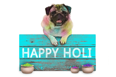 lovely Festival of colors pug puppy dog, covered with colored powder, hanging on sign with text happy Holi, isolated on white background Stockfoto