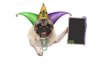 Mardi gras pug puppy hondje met carnaval nar hoed, Venetiaans masker en leeg schoolbord teken, opknoping op witte banner, geïsoleerd op een witte achtergrond Stockfoto