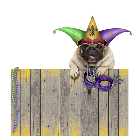 Mardi gras carnival pug dog with  harlequin jester hat and venetian mask hanging on wooden fence, isolated on white background Stockfoto - 94766176