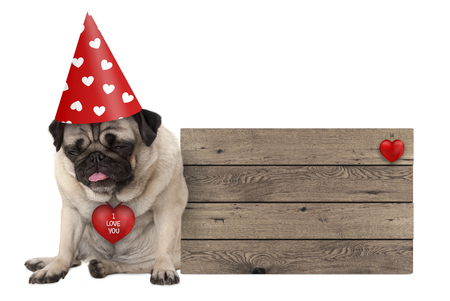 grumpy Valentiness day pug dog puppy with party hat sitting down next to wooden sign, isolated on white background
