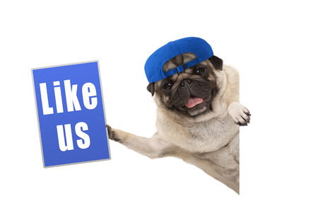 frolic pug puppy dog holding up blue like us sign, hanging sideways from white banner, isolated Stockfoto - 94901909