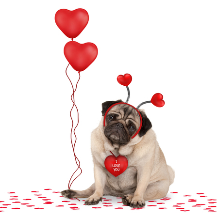 lovely cute valentines day pug puppy dog sitting down on confetti, wearing hearts diadem and holding red heart shaped balloons, isolated on white background