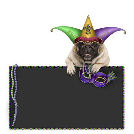 Mardi gras carnival pug dog with carnival hat, beads, harlequin jester hat and venetian mask hanging on blackboard sign, isolated on white background Stockfoto