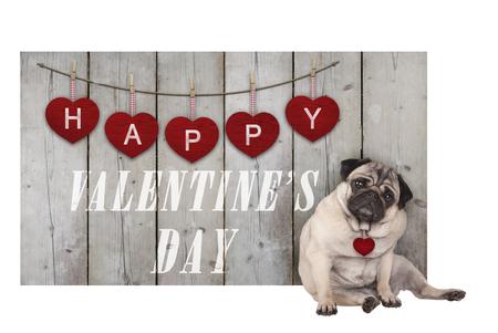 Leuke pug puppyhond die naast houten omheining van gebruikt steigerhout met rode harten en tekst gelukkige valentijnskaartendag gaat zitten, die op witte achtergrond wordt geïsoleerd