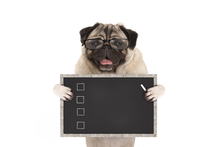 cute male pug dog puppy holding up blank checklist on blackboard with check boxes drawn with chalk, isolated on white background Stockfoto
