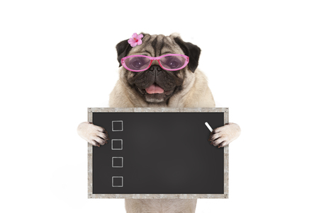 cute female pug dog puppy holding up blank checklist on blackboard with check boxes drawn with chalk, isolated on white background Stockfoto