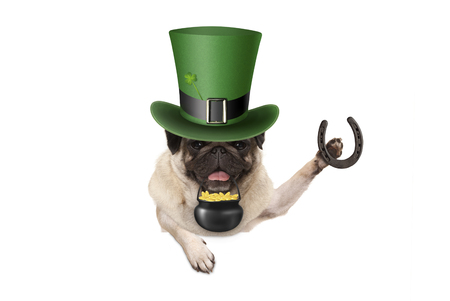 st patricks day pug puppy dog with green leprechaun hat, holding horseshoe and pot with golden coins, isolated on white background