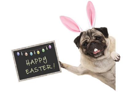 Easter bunny pug puppy dog with ears, eggs and blackboard with text happy easter, sideways from white banner Stockfoto