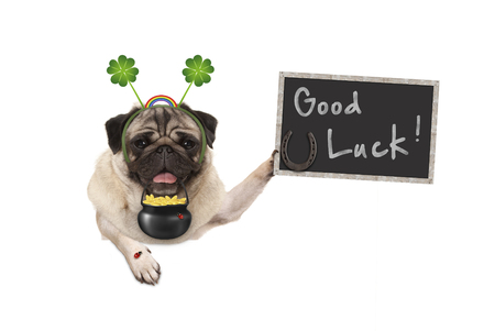Talisman pug puppy dog, with shamrock clover, golden coins, lady bug and horse shoe for good luck and success, isolated on white background Stockfoto
