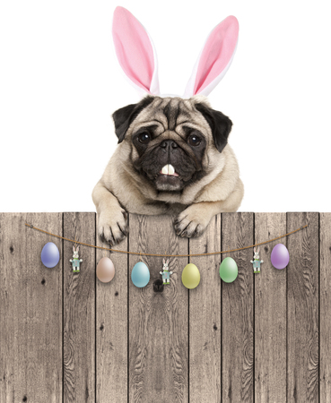 lovely pug dog with easter bunny ears diadem, hanging with paws on wooden fence with egg decoration, isolated on white background Stockfoto