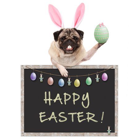 cute pug puppy dog with bunny ears diadem, holding up easter egg hanging with paws on blackboard sign with text happy easter and decoration, isolated on white background Stockfoto