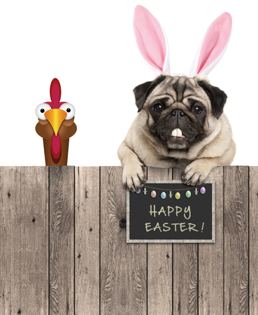 lovely pug dog with easter bunny ears diadem and chicken, with sign saying happy easter, isolated on white background