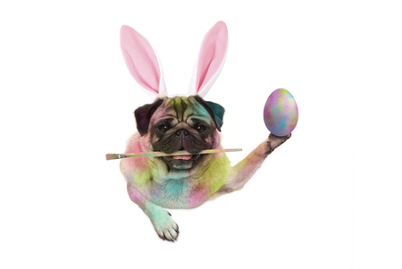 colorful easter pug dog bunny painting easter eggs, holding paintbrush, isolated on white background