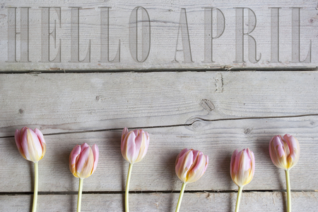Hello April carved in vintage wooden backdrop, with blooming pink spring tulips