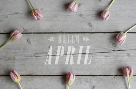 top view of pink tulips on vintage wooden ground, with text hello april Stockfoto - 98753103