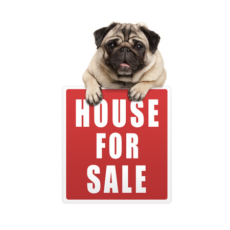 cute pug puppy dog hanging with paws on red house for sale sign, isolated on white background