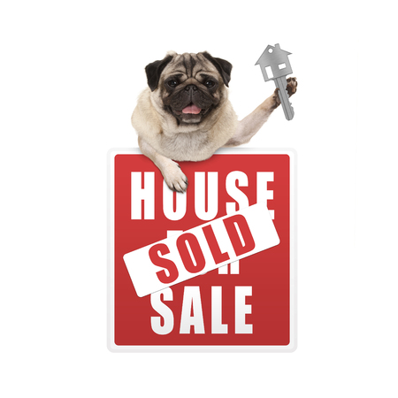 happy pug puppy dog hanging with paws on red house sold sign holding up house key, isolated on white background