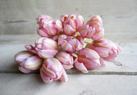 bouquet of pink spring tulips in bloom, lying down on wooden background Stockfoto - 98753141