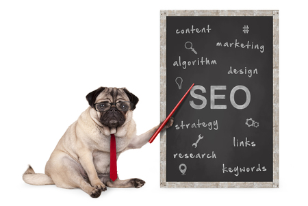 business pug dog holding red pointer, pointing out  search engine optimization, SEO, performance strategy, hand drawn on chalkboard, isolated on white background Archivio Fotografico