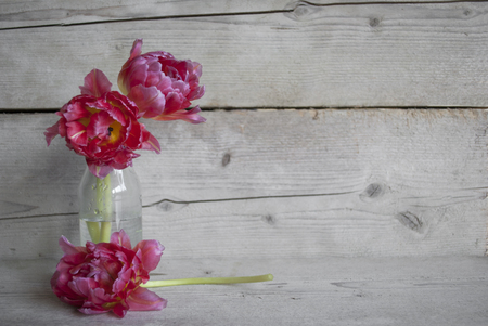 Pink Dutch peony tulips in glass bottle, on old wooden background with petals