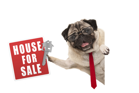 happy business pug dog witg glasses and tie, holding up red house for sale sign and key, isolated on white background Imagens
