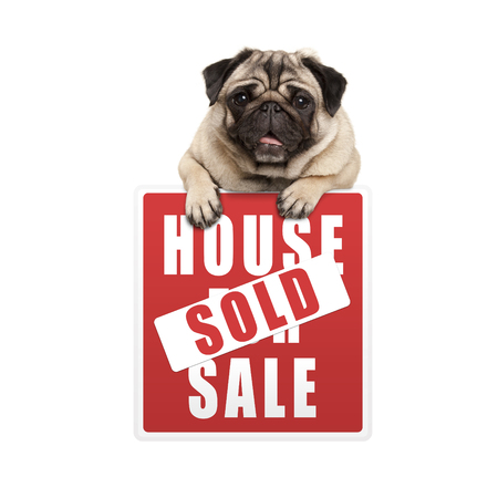 cute smiling pug puppy dog hanging with paws on red house sold sign, isolated on white background