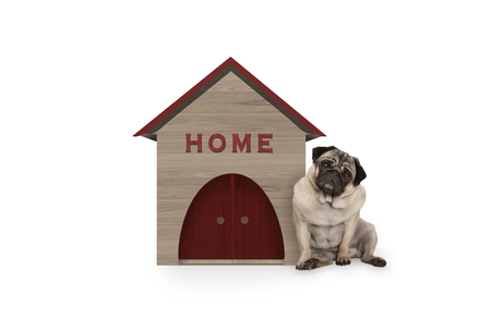 cheeky pug puppy dog sitting down next to dog house with sign Home, isolated on white background Stockfoto