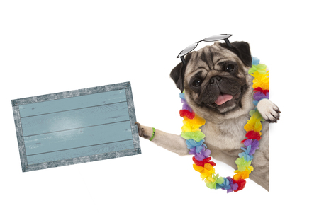 frolic summer pug dog with hawaiian flower garland and sunglasses, holding up blue vintage wooden board, isolated on white background Stockfoto