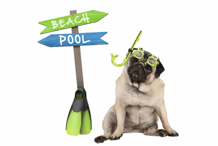 cute smart pug puppy dog sitting down wearing goggles and snorkel, next to signpost with text pool and beach, isolated on white background Stockfoto - 104935486