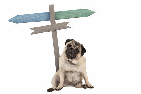 funny cute pug puppy dog sitting down next to blank signpost; with signs pointing left and right, isolated on white background Stockfoto - 103512937