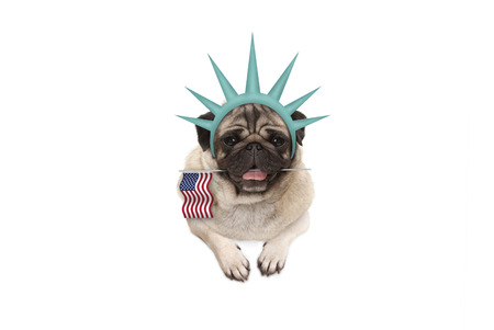 smiling pug puppy dog holding American flag, hanging on white banner, wearing lady Liberty crown, isolated Stockfoto - 103512939