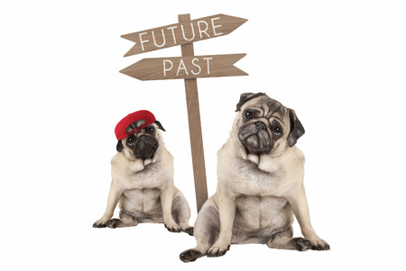 pug puppy dog and aged animal sitting next to signpost with text past and future, isolated on white background Stockfoto