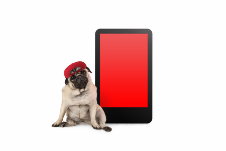 cute pug puppy dog looking smart, sitting next to tablet phone with blank red screen, wearing cap, isolated on white Stockfoto - 112438544