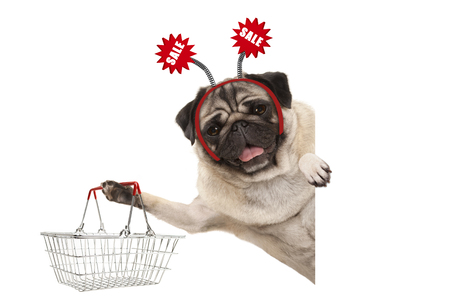 happy smiling pug puppy dog, holding up shopping basket, wearing diadem with red sale sign, isolated on white background Stockfoto - 112438546