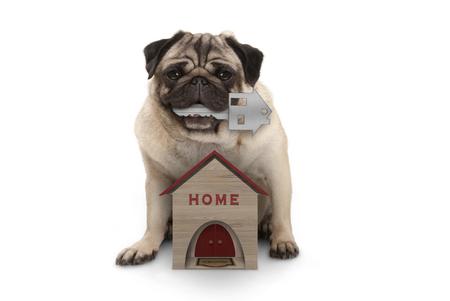 glücklicher Mopswelpenhund mit Hausschlüssel, der sich mit Miniaturhaus hinsetzt, lokalisiert auf weißem Hintergrund white