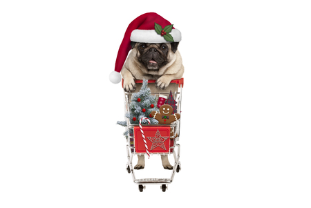 cute happy seasonal pug puppy dog with shopping cart full of christmas decoration, candy and tree, isolated on white background Stockfoto - 116082219