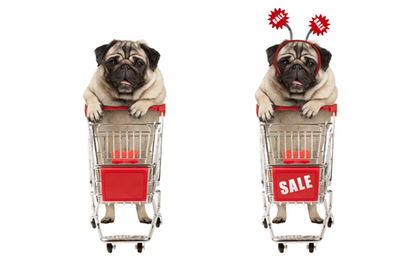 funny smiling shopping pug puppy dog standing behind red wired metal shopping cart with sale sign,  isolated on white background Stockfoto - 116082220