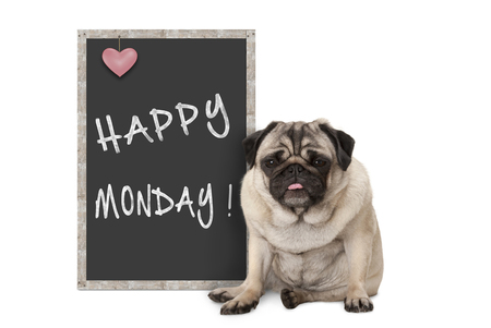 cute grumpy pug puppy dog with bad monday morning mood, sitting next to blackboard sign with text happy monday Imagens - 116082222