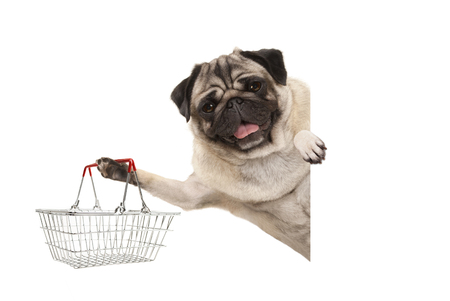 happy smiling pug puppy dog, holding up wire metal shopping basket,behind white banner, isolated Stock Photo