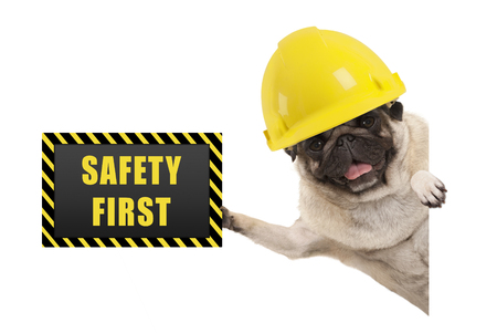 frolic smiling pug puppy dog with yellow constructor helmet, holding up black and yellow safety first sign board, isolated on white background Stockfoto